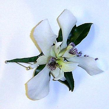 Boutonnier - Orchid 1