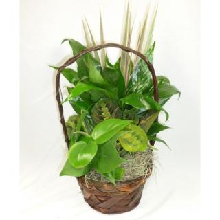 Basket Garden - Small