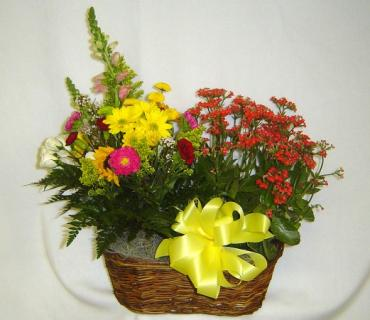 Basket of Color